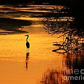 Sublime Silhouette Print by Al Powell Photography USA