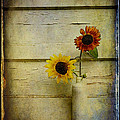 Summer Sunflowers Poster by Sari Sauls