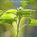 Sun Drenched Sunflower with Bible Verse Print by Debbie Portwood