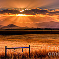 Sun Sets On Summer Poster by Katie LaSalle-Lowery