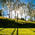 Sun shining through trees and shadows on the grass at Antietam National Battlefield Maryland Poster by Jon Bilous