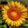 Sunflower Print by Adrian Evans