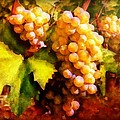 Sunny Grapes - edition 2 Print by Lilia D