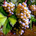 Sunny Grapes - edition 3 Print by Lilia D