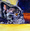Sunny Patch French Bulldog Print by Lyn Cook
