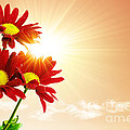 Sunrays Flowers Print by Carlos Caetano