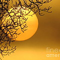 Sunrise through the Fog Print by David Lankton