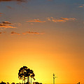 Sunset at Long Pine Key Vertical Print by Andres Leon