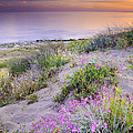 Sunset at the beach  Flowers on the sand Print by Guido Montanes Castillo