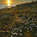 Sunset at the beach  White flowers on the sand Print by Guido Montanes Castillo