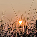 Sunset through the Grass - Villas New Jersey Print by Bill Cannon