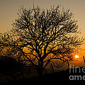 Sunset Tree Poster by Anne Gilbert