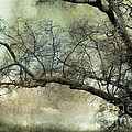 Surreal Gothic Dreamy Trees Nature Landscape Poster by Kathy Fornal