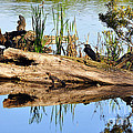 Swamp Scene Print by Al Powell Photography USA