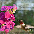 Sweet Pea Hummingbird IV with verse Print by Debbie Portwood