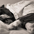 Sweet Sleeping Boxer by Stephanie McDowell