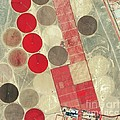 Tadco Farm Saudi Arabia Satellite Print by GeoEye