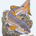 Tailing Redfish Poster by Carey Chen