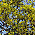 Tangled In Time Print by Pamela Gail Torres
