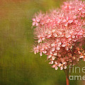 Taste of Summer Print by Reflective Moment Photography And Digital Art Images