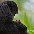 Tender Moments Poster by Ashley Vincent