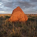Termite mound, Exmouth Western Print by Science Photo Library