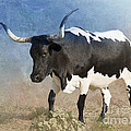 Texas Longhorn #7 Print by Betty LaRue