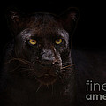 The Beauty of Black Poster by Ashley Vincent