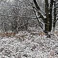 The Beauty of Winter Print by Aimee L Maher Photography and Art