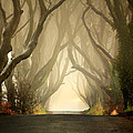 The Dark Hedges 2011 Print by Pawel Klarecki