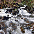 The Elusive Conestoga Waterfall Print by Gene Walls