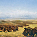 The Gathering of the Herd Print by William Jacob Hays