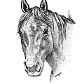 The Gentle Eye Horse Head Study Poster by Renee Forth-Fukumoto
