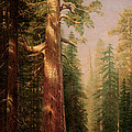 The Great Trees Mariposa Grove California Print by Albert Bierstadt