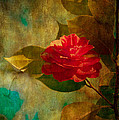 The Lady of the Camellias Print by Loriental Photography