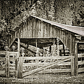 The Last Barn Print by Joan Carroll