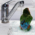 The Lovebird's Shower Print by Terri  Waters