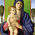 The Madonna of the Trees Print by Giovanni Bellini