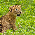 The Markings of Youth Poster by Ashley Vincent