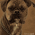 The Modern Boxer Bulldog Print by Lesa Fine