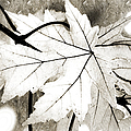 The Mysterious Leaf Abstract BW Print by Andee Design