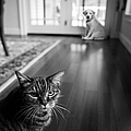 The old cat and the new puppy Print by Diane Diederich
