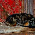 The Old Mill Cat Print by Julie Dant