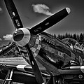 The P-51 Speedball Alice Mustang Print by David Patterson