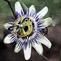 The Passion Flower in Abstract Poster by Janice Rae Pariza