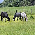 The Pasture Poster by Susan Leggett