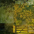 The Pasture Poster by Terri Gostola