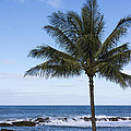 The Perfect Palm Tree - Sunset Beach Oahu Hawaii Print by Brian Harig