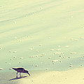 The Sandpiper Print by Amy Tyler