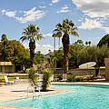 THE SANDPIPER POOL Palm Desert Print by William Dey
